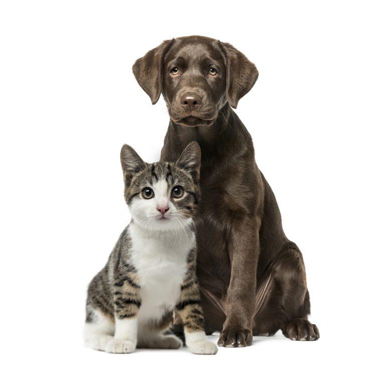 Pies czy kot – jak wybrać zwierzątko domowe?